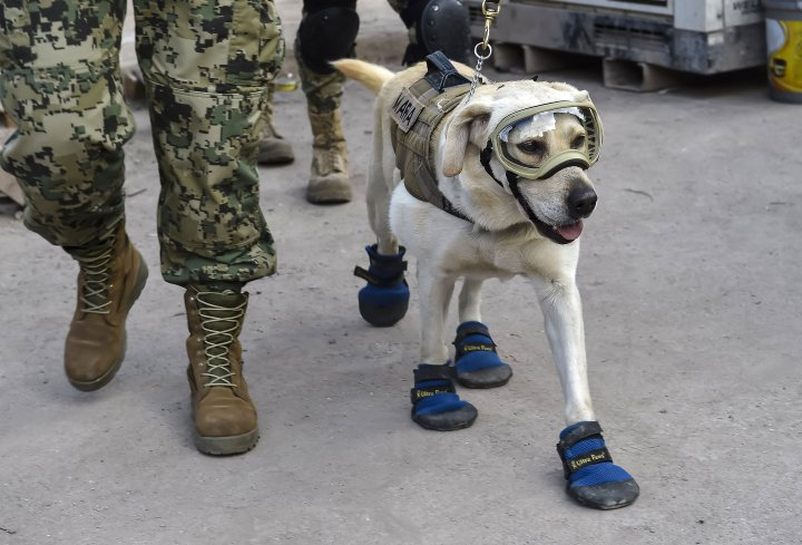 MEXICO-QUAKE-RESCUE-DOG-FRIDA