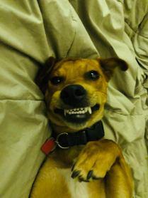dog smiles 1